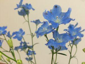 きれいな青。