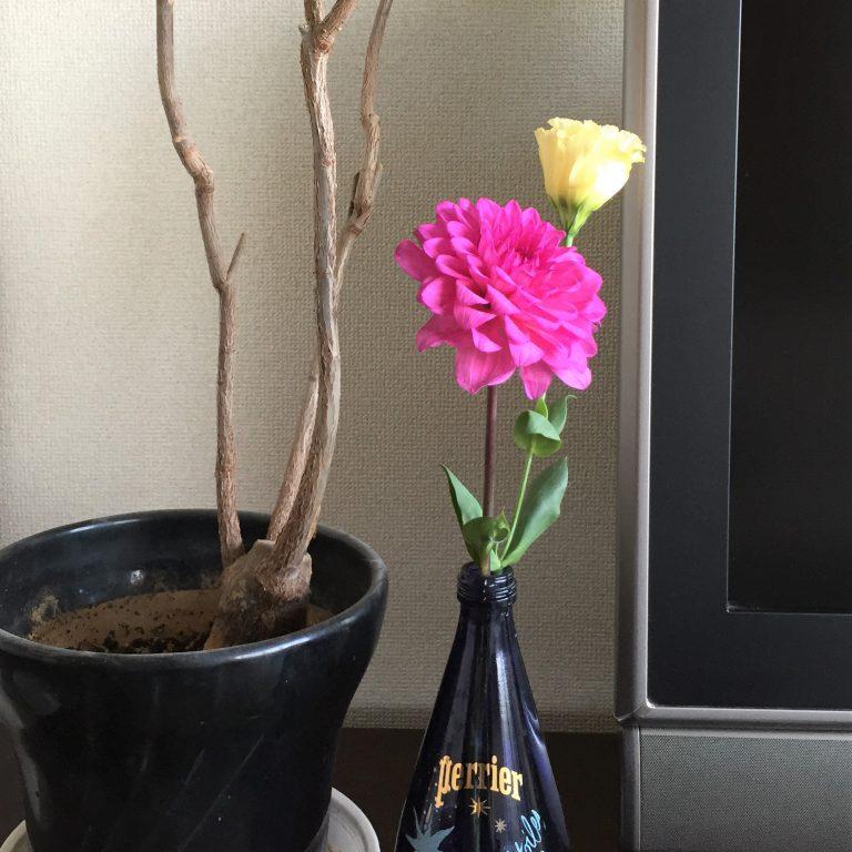 花のあるうるおい生活。ダリアとトルコキキョウ