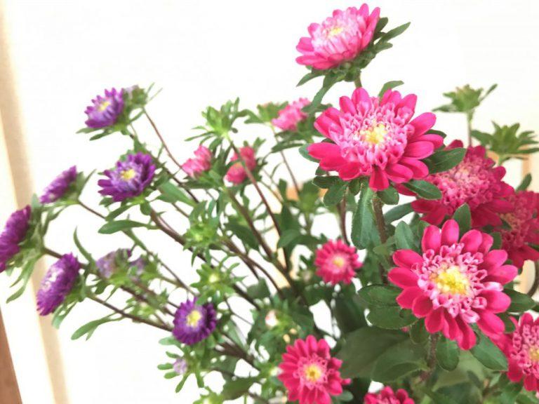 花のあるうるおい生活:アスター