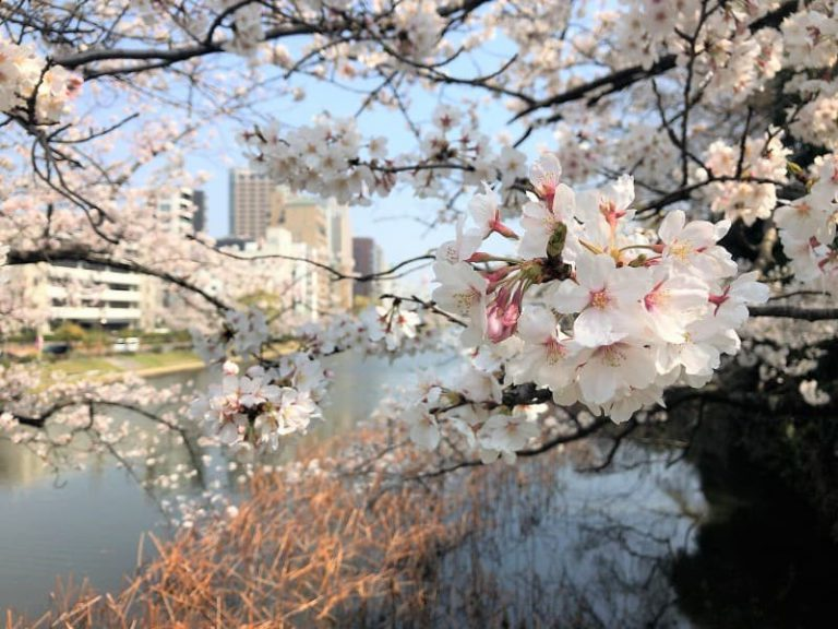 福岡 西公園・舞鶴公園