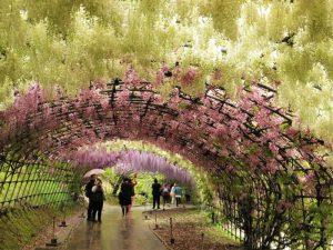 河内藤園のトンネル