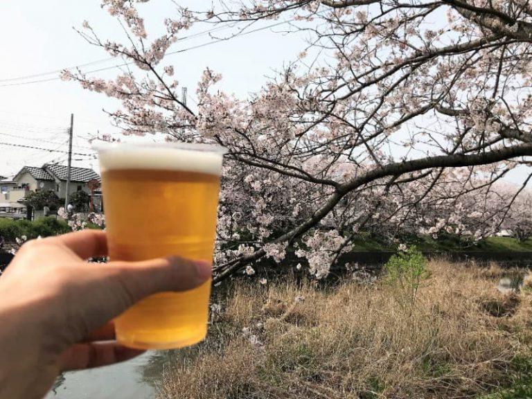 【糸島生活】池田川(瑞梅寺川)の桜まつり