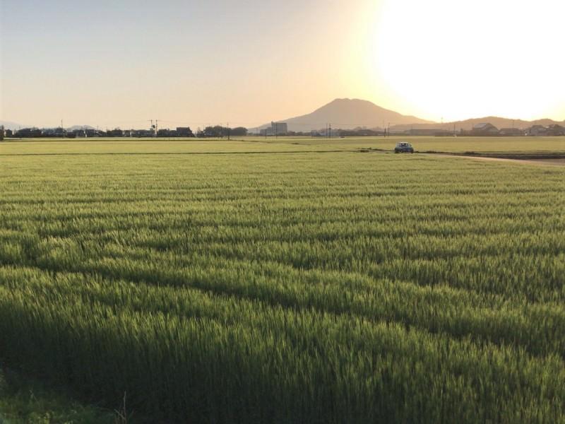 初夏の糸島風景