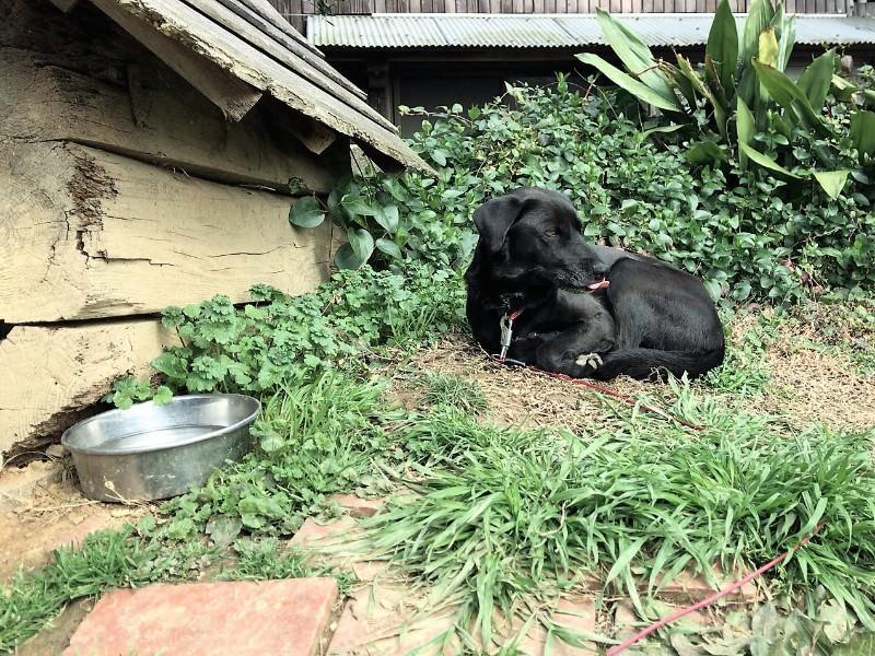 写真:ラスティックバーン 看板犬パピコ