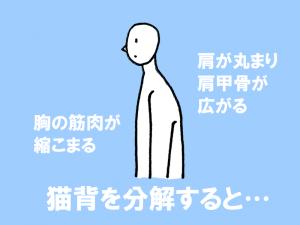 図:猫背を分解すると、肩が丸まり肩甲骨が広がる、そして