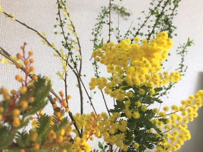 写真:ミモザの花