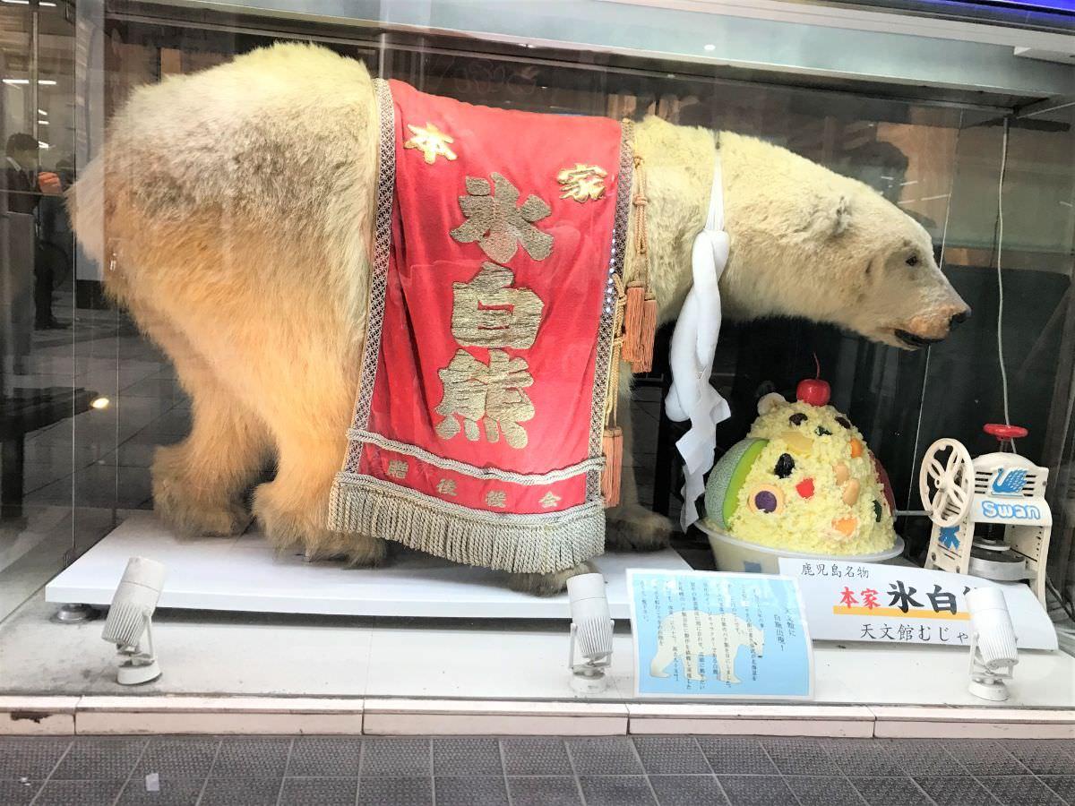 写真:天文館むじゃき 白熊のはく製