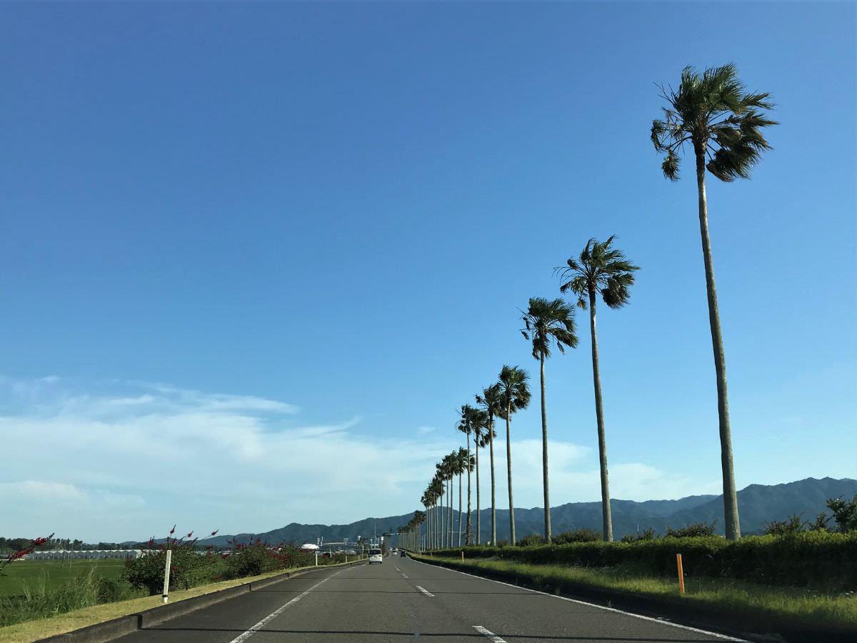 写真:宮崎 道路