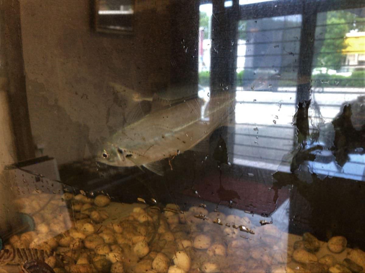 写真:大分別府 和音 水槽