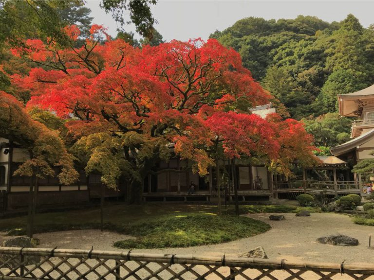 写真:福岡糸島 雷山千如寺大悲王院の大楓が紅葉中