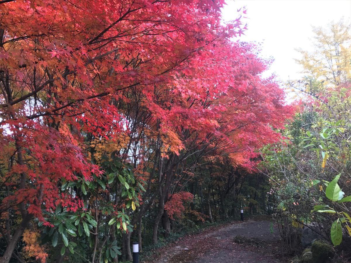 写真:佐賀熊の川温泉 湯招花の紅葉