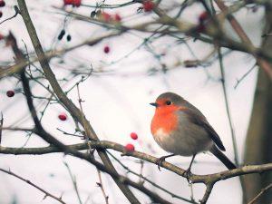 写真:小鳥のいる実のなる木イメージ