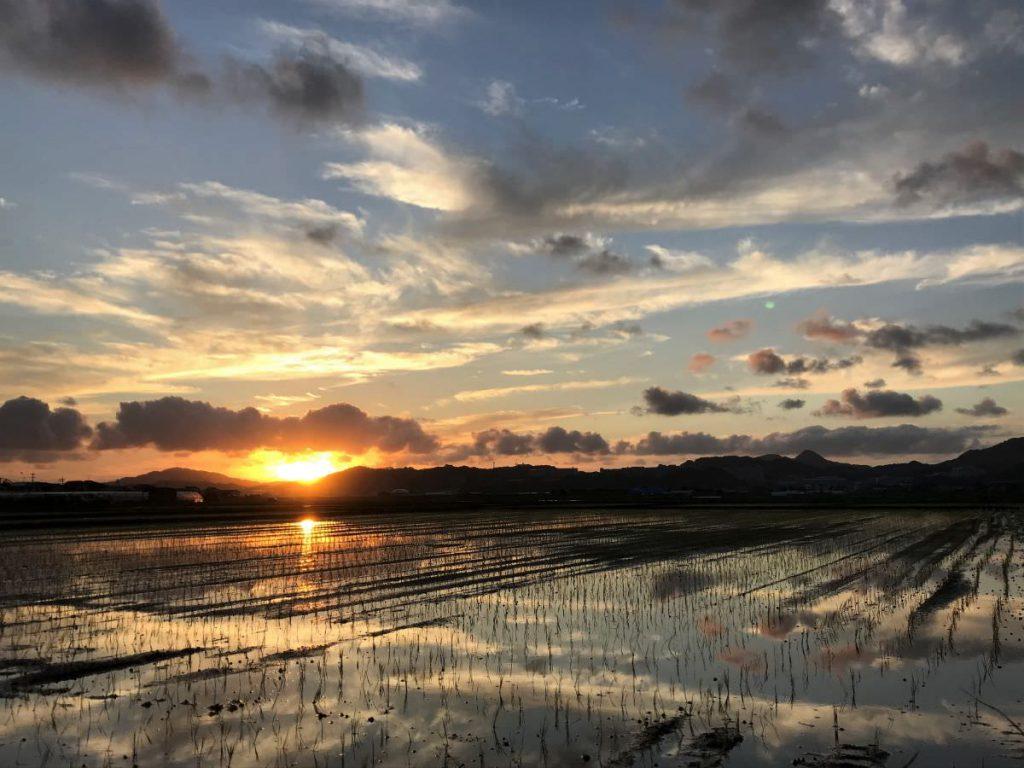 写真:福岡糸島の水田の風景