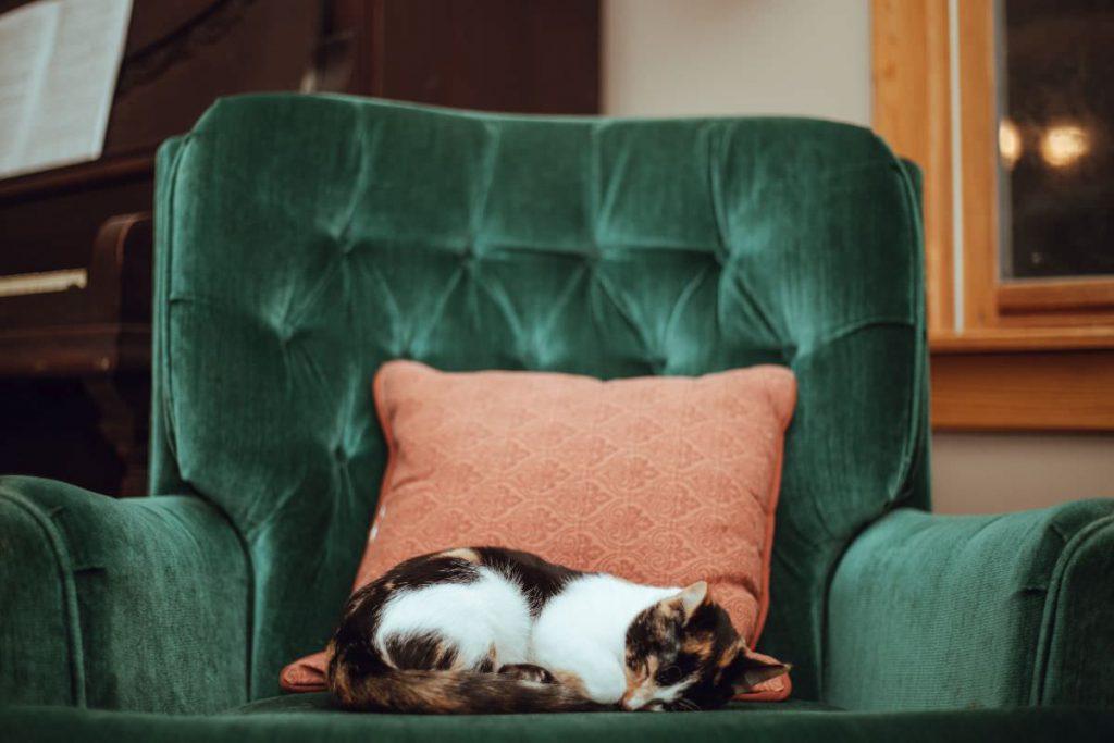 写真:猫の昼寝イメージ
