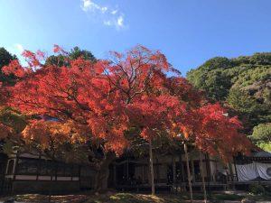写真:福岡糸島 雷山千如寺大悲王院の大楓