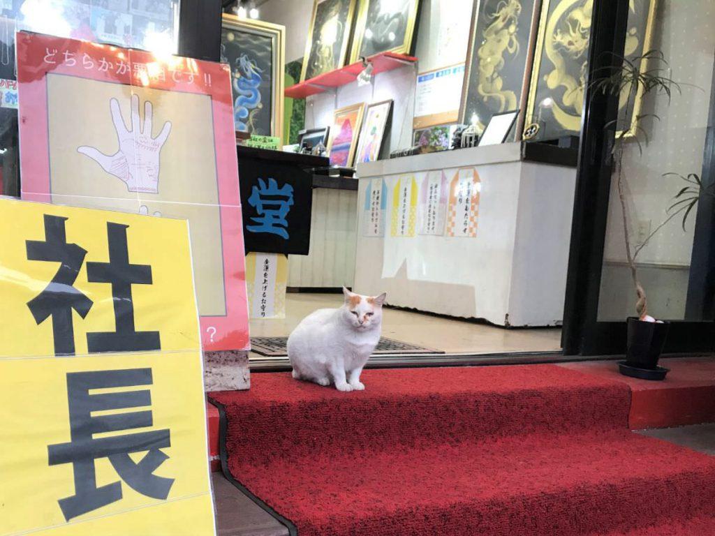 写真:大分由布院の占いのお店の看板猫さん