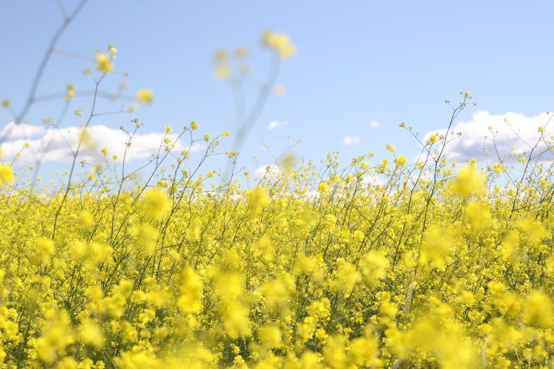 写真:春到来イメージ
