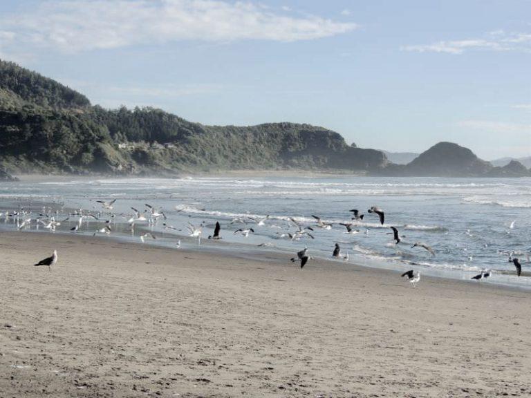 写真:海岸にいる鳥のイメージ
