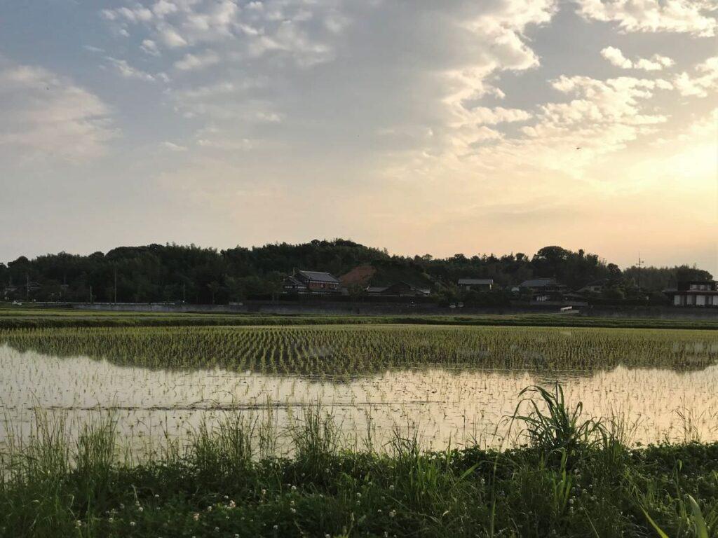 写真:福岡糸島の水田風景