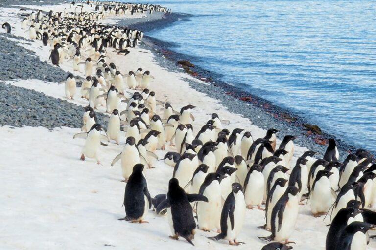 写真:涼しい場所イメージ(ペンギン)