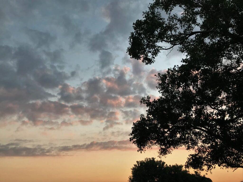 写真:夕暮れに木陰シルエット